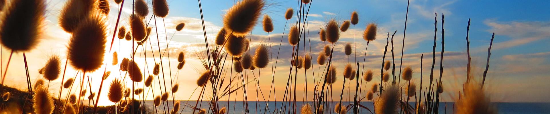 grasses-slide