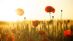 2021 Yorke Peninsula ANZAC Day Services