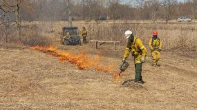 Scheduled Prescribed Burn: West-side of Marion Bay