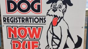 Dog Registrations Now Due